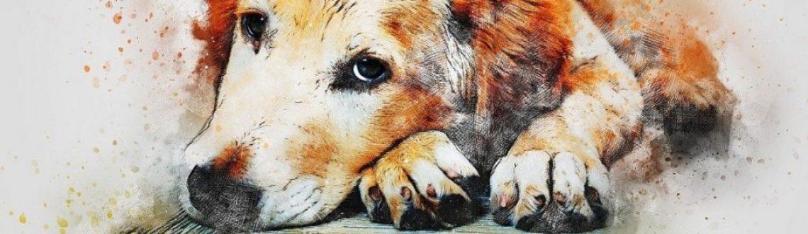 Orejitas de perro
